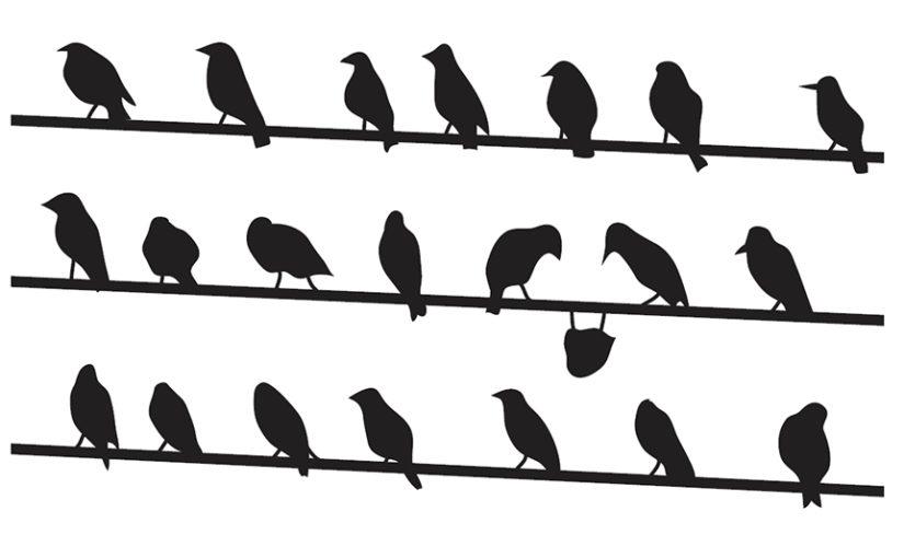 Vreemde vogel? uTalent, handvat bij diversiteit